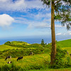 Portugal Azores Sao Miguel Island Photography 24 By Messagez com