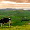 Original Terceira Island Top Viewpoint Landscape Photography 4 By Messagez com