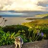 Portugal Azores Sao Miguel Island Photography 56 By Messagez com