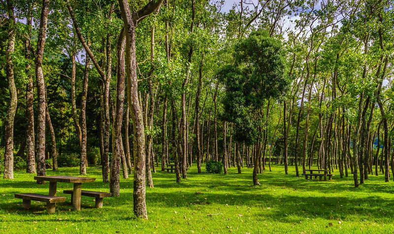 Original Azores Green Forest Photography By Messagez com