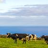 Original Azores Terceira Island Landscape Photography 53 By Messagez com