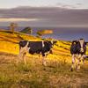 Original Azores Terceira Island Landscape Photography 20 By Messagez com