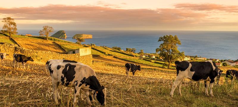 Original Azores Terceira Island Landscape Photography 54 By Messagez com