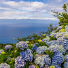 Azores Islands Flower Beauty Photography By Messagez com