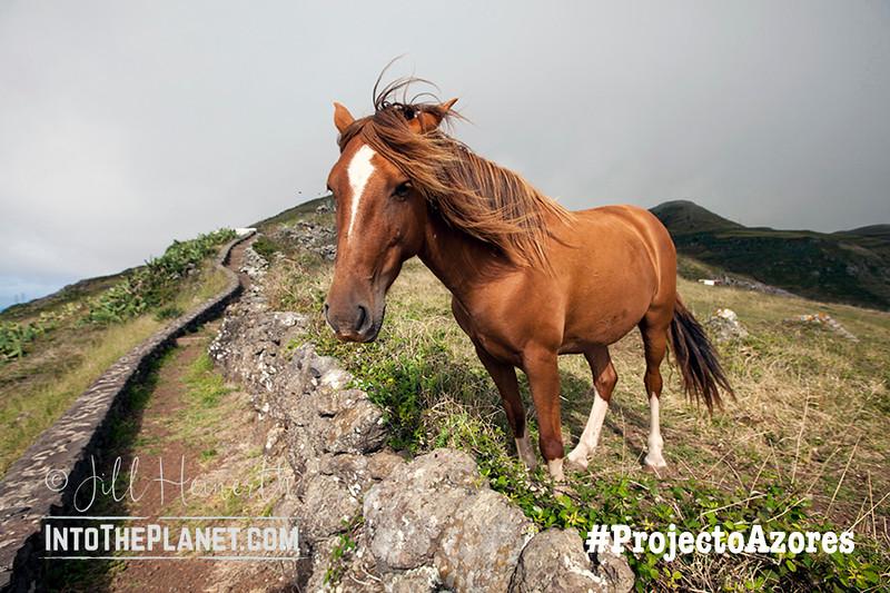 Horse 4277l