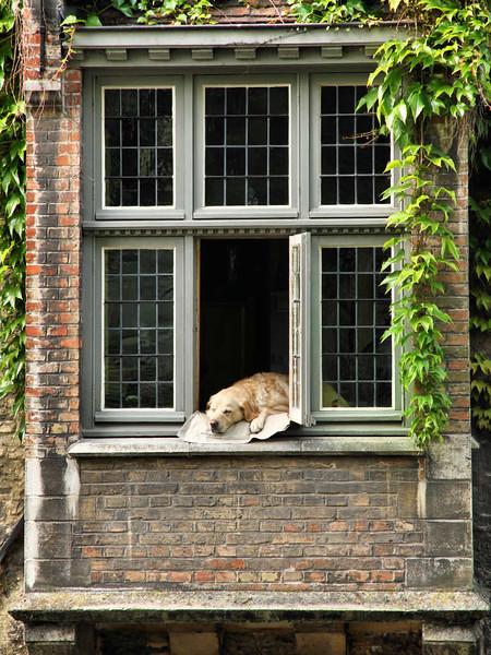 Detalhes Arquitetônicos de Bruges