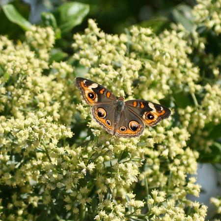 BS3a Butterflies