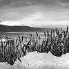 Reeds in Ice 8x16 c
