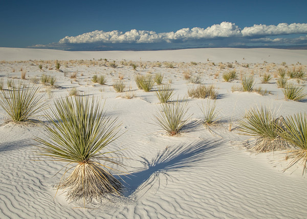 Agave and Clouds, White Sands National Monument