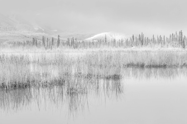 Vermilion Lakes Reeds Banff
