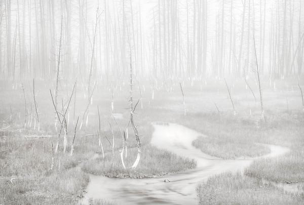 Bobby Socks Trees in Fog Yellowstone