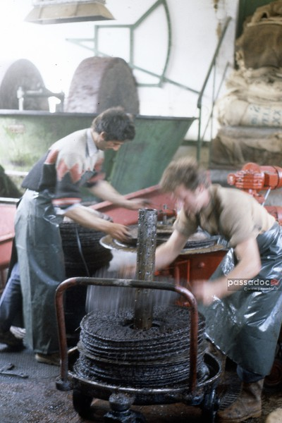 Fabrication de l'huile d'olive au moulin en Provence; olive oil making in a mill in Provence