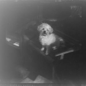 Daitoh Grace Camera