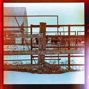 Expired film in The Manitoba Prairies