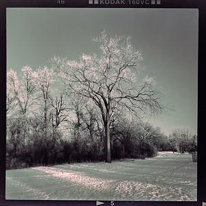 Mamiya 6 - expired film in the park