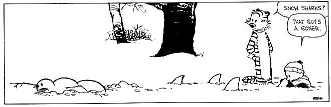 calvin-snowshark