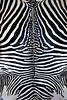 animal zebra skin black and white fur stripes