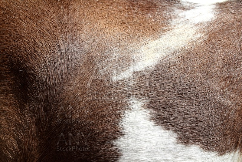 horse hair skin texture brown and white