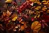 Autumn fall golden red leaves on wood