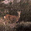 sabrina-camping2012_deer-eyes