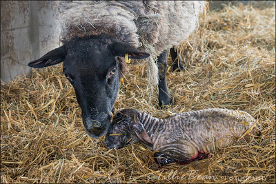 Minutes old