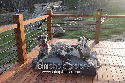 BAD-Dog-Beds-4322_05-10-16  by Brianna Morrissey  ©BLM Photography 2016