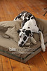 BAD-Dog-Beds-0273_05-26-16  by Brianna Morrissey  ©BLM Photography 2016