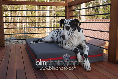 BAD-Dog-Beds-4221_05-10-16  by Brianna Morrissey  ©BLM Photography 2016