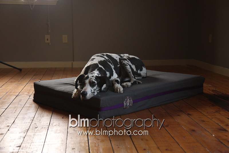 BAD-Dog-Beds-0079_05-26-16  by Brianna Morrissey  ©BLM Photography 2016