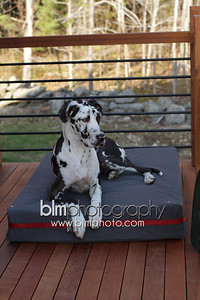 BAD-Dog-Beds-4207_05-10-16  by Brianna Morrissey  ©BLM Photography 2016