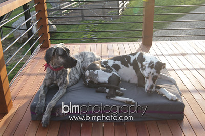BAD-Dog-Beds-4311_05-10-16  by Brianna Morrissey  ©BLM Photography 2016