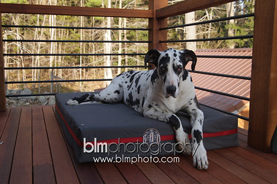 BAD-Dog-Beds-4222_05-10-16  by Brianna Morrissey  ©BLM Photography 2016