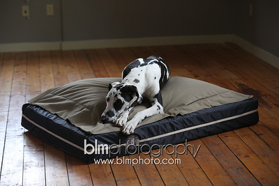 BAD-Dog-Beds-0677_05-26-16  by Brianna Morrissey  ©BLM Photography 2016