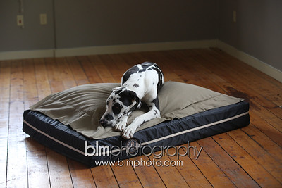 BAD-Dog-Beds-0673_05-26-16  by Brianna Morrissey  ©BLM Photography 2016