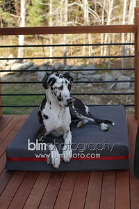 BAD-Dog-Beds-4209_05-10-16  by Brianna Morrissey  ©BLM Photography 2016