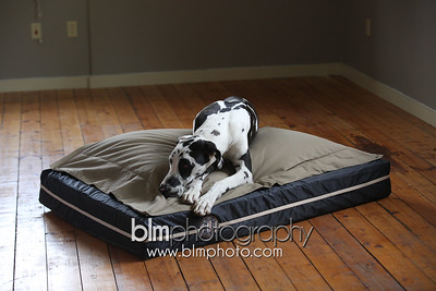 BAD-Dog-Beds-0672_05-26-16  by Brianna Morrissey  ©BLM Photography 2016