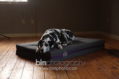 BAD-Dog-Beds-0078_05-26-16  by Brianna Morrissey  ©BLM Photography 2016