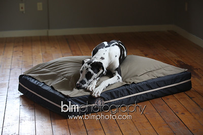 BAD-Dog-Beds-0678_05-26-16  by Brianna Morrissey  ©BLM Photography 2016
