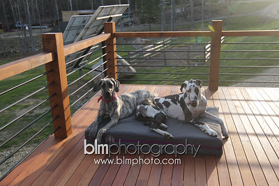 BAD-Dog-Beds-4318_05-10-16  by Brianna Morrissey  ©BLM Photography 2016