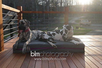 BAD-Dog-Beds-4352_05-10-16  by Brianna Morrissey  ©BLM Photography 2016