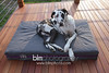 BAD-Dog-Beds-4367_05-10-16  by Brianna Morrissey  ©BLM Photography 2016