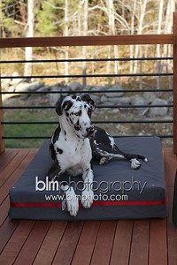 BAD-Dog-Beds-4208_05-10-16  by Brianna Morrissey  ©BLM Photography 2016