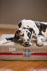 BAD-Dog-Beds-0146_05-26-16  by Brianna Morrissey  ©BLM Photography 2016