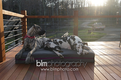 BAD-Dog-Beds-4350_05-10-16  by Brianna Morrissey  ©BLM Photography 2016