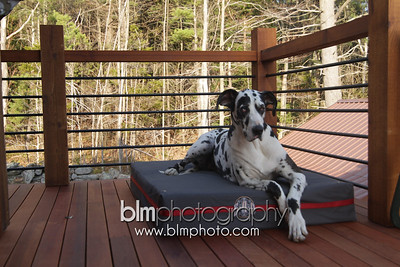 BAD-Dog-Beds-4216_05-10-16  by Brianna Morrissey  ©BLM Photography 2016