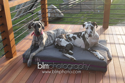 BAD-Dog-Beds-4324_05-10-16  by Brianna Morrissey  ©BLM Photography 2016