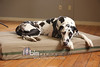 BAD-Dog-Beds-0283_05-26-16  by Brianna Morrissey  ©BLM Photography 2016