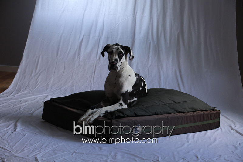 BAD-Dog-Beds-1333_05-27-16  by Brianna Morrissey  ©BLM Photography 2016