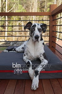 BAD-Dog-Beds-4226_05-10-16  by Brianna Morrissey  ©BLM Photography 2016