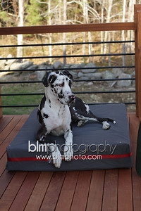 BAD-Dog-Beds-4206_05-10-16  by Brianna Morrissey  ©BLM Photography 2016